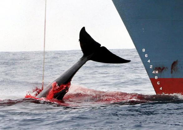 caza-ballenas-mar-wag1mag
