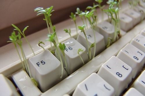 green-keyboard-wag1mag