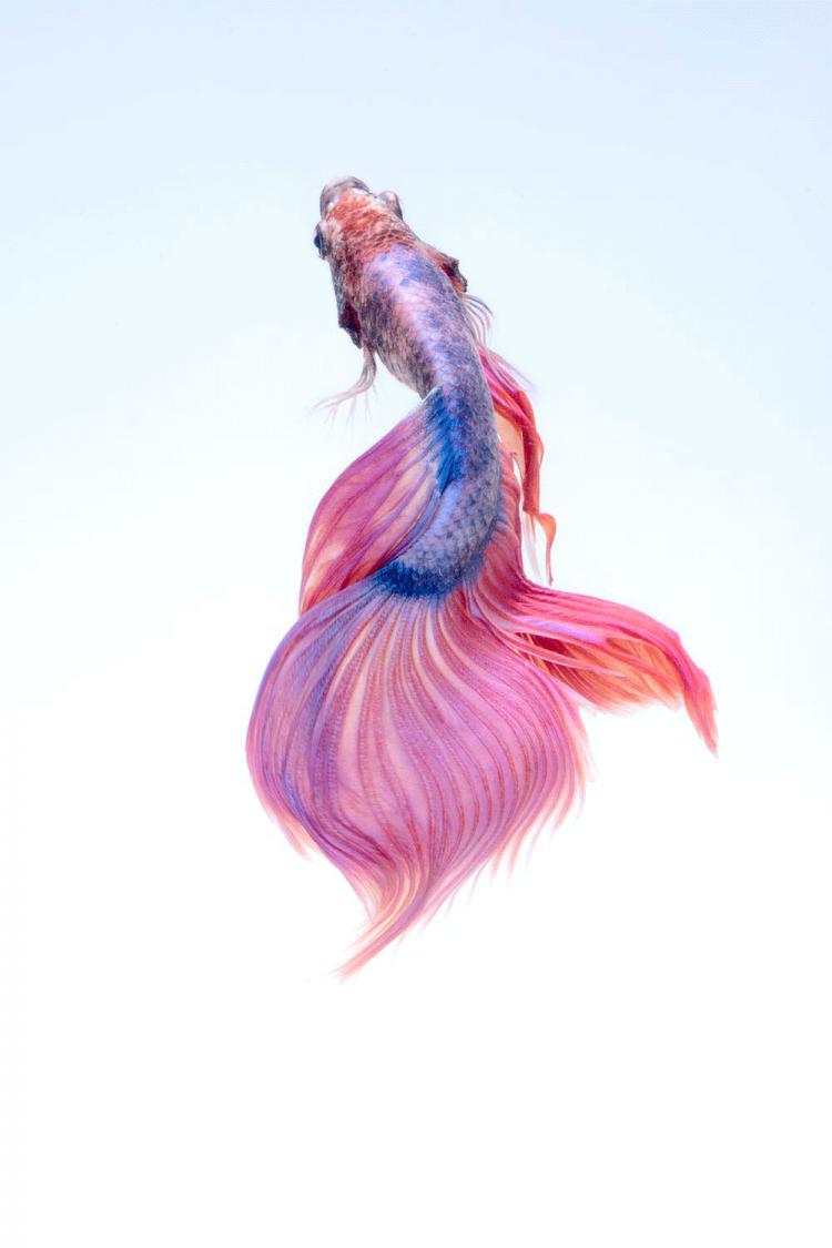 mermaid-portada-wag1mag Vía Pexels