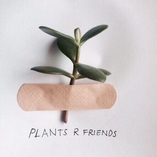 plants-are-friends-wag1mag