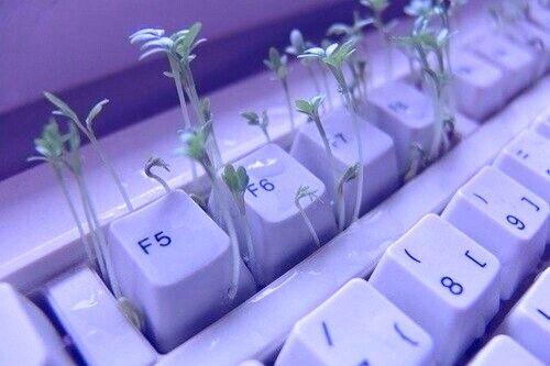 teclado-malva-wag1mag